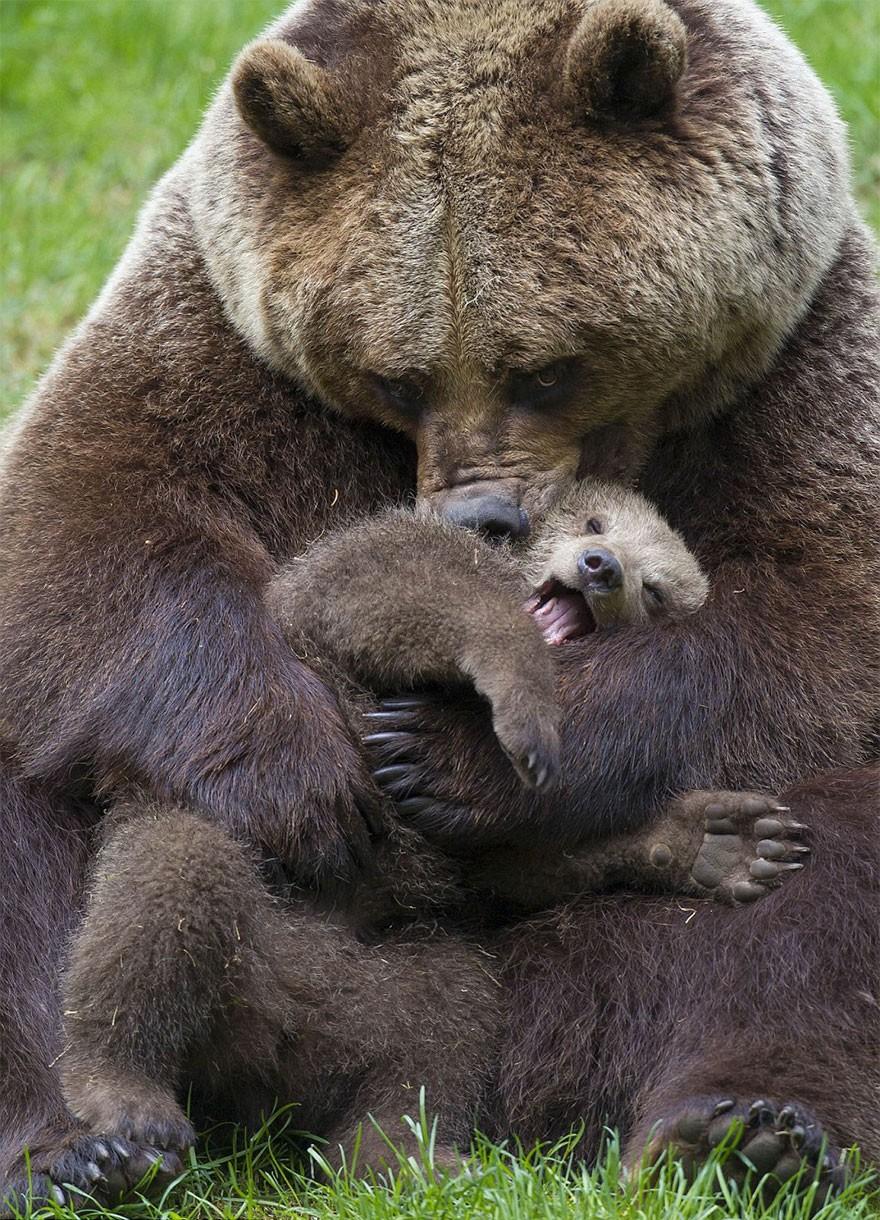 Мишка в объятиях мамы