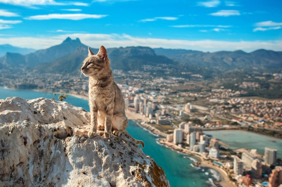 Котейка на вершине