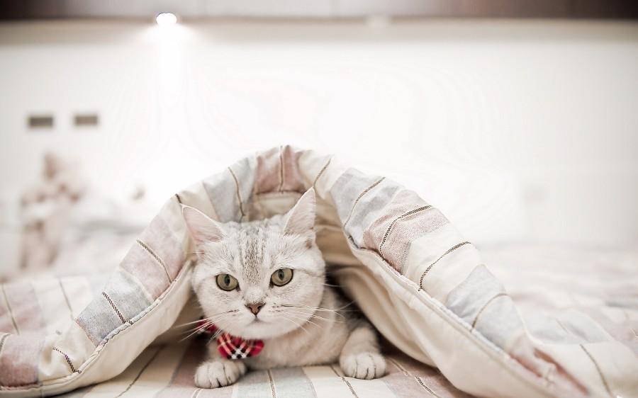 Красивый котейка