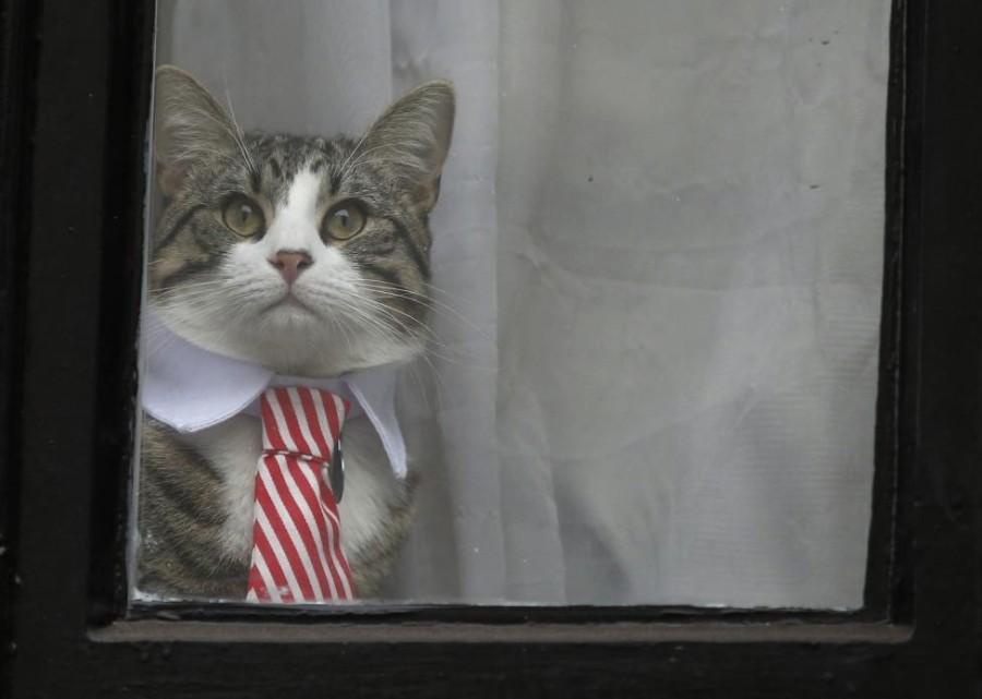 В галстуке