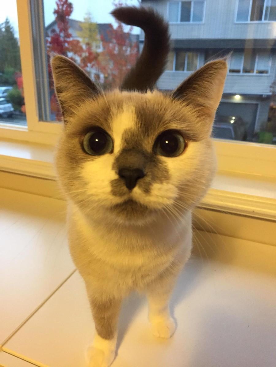 Пятнистый котейка