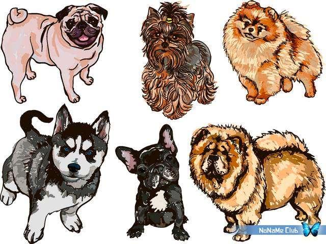 Векторный клипарт - Different Dogs Set 5 [AI]