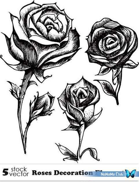 Векторный клипарт - Roses Decoration Elements 10 [AI]