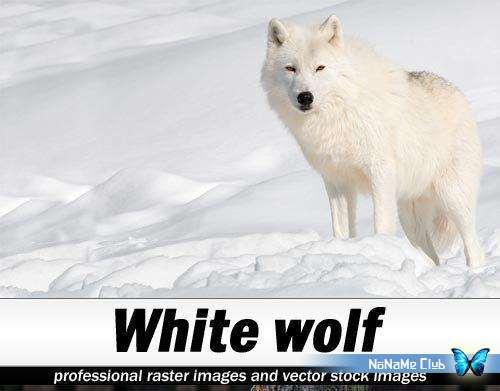 Растровый клипарт - Shutterstock - White Wolf [JPG]