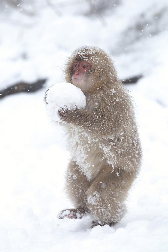 Время играть в снежки