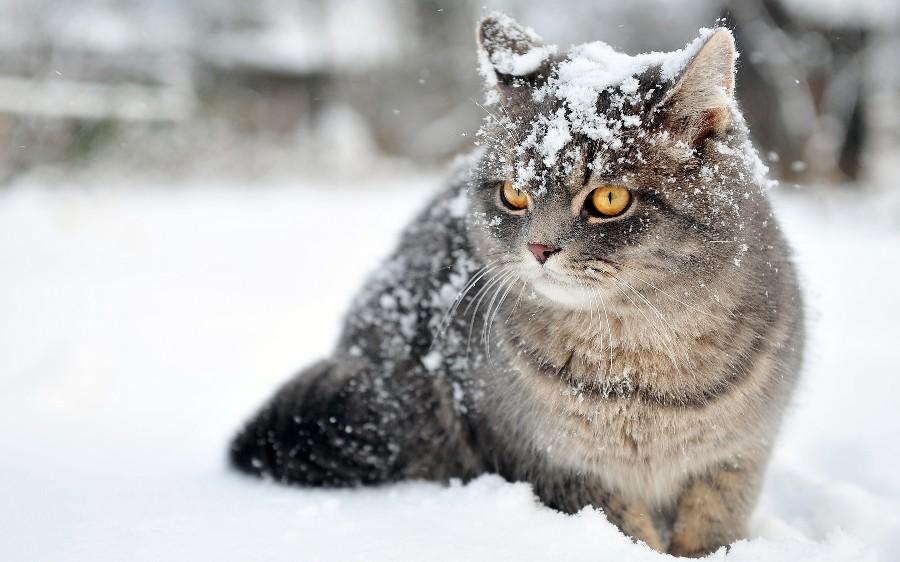 Котейка в снегу