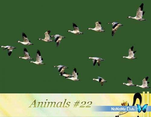 Растровый клипарт - Animals #22 [PNG]