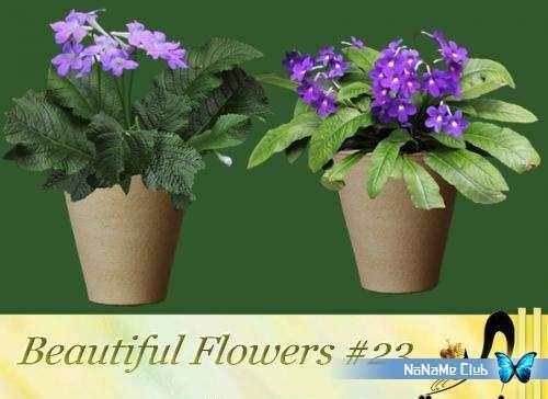 Растровый клипарт - Beautiful Flowers #23 [PNG]