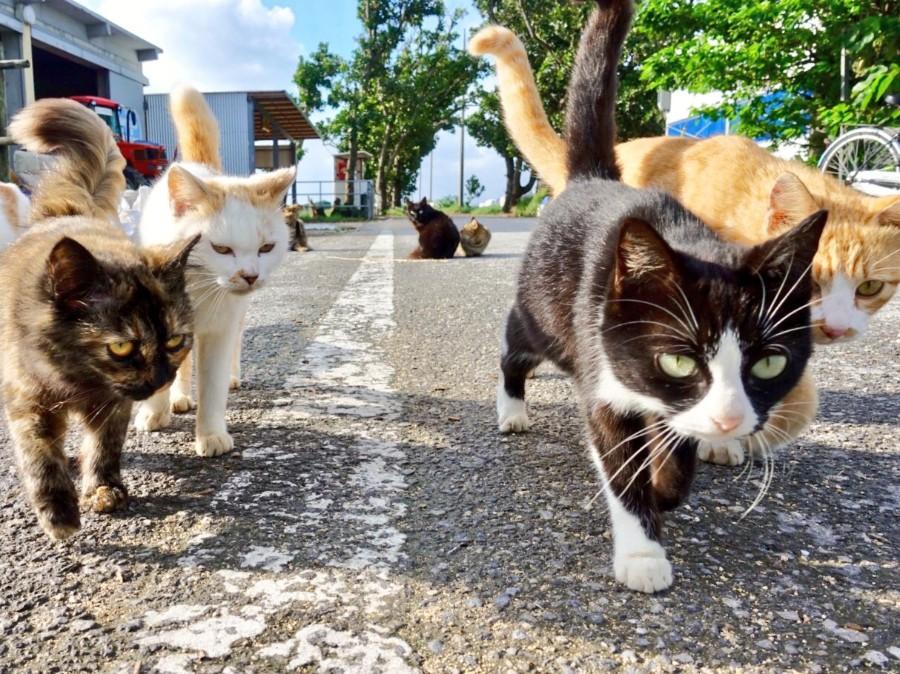 Уличная банда