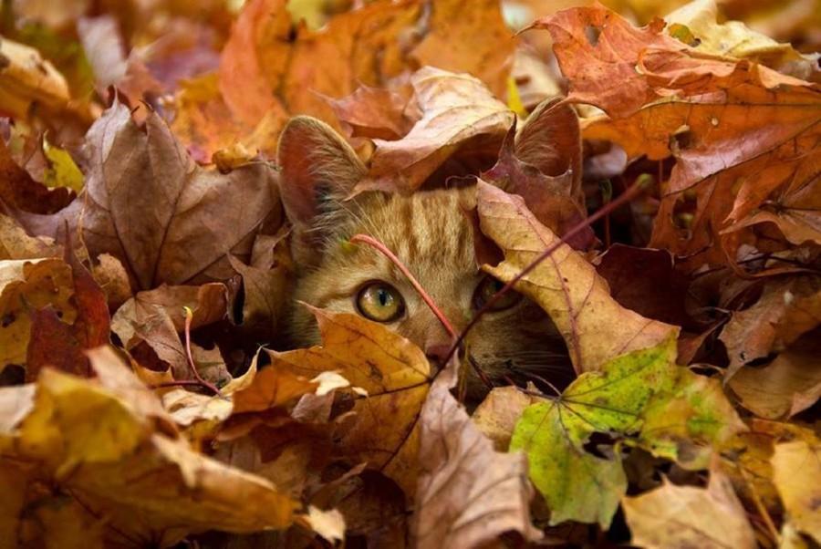 Засада в листьях