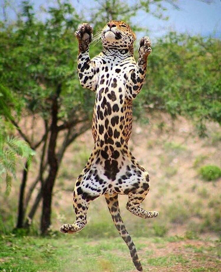 В прыжке