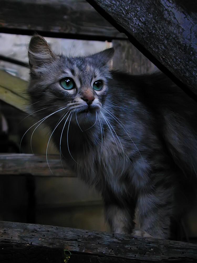 Суровый котйка