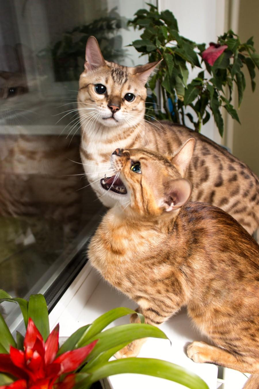 Красивые котейки