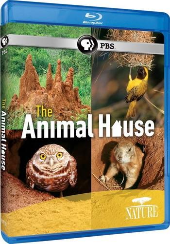 PBS: Природа - Дом животных / Nature - The Animal House (2011) BDRemux [H.264/1080i]