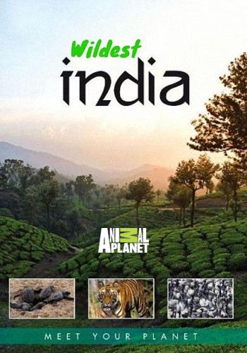 Animal Planet: В дебрях Индии / Wildest India (2011) HDTV [H.264/1080i-LQ] (серии 1-3 из 5)