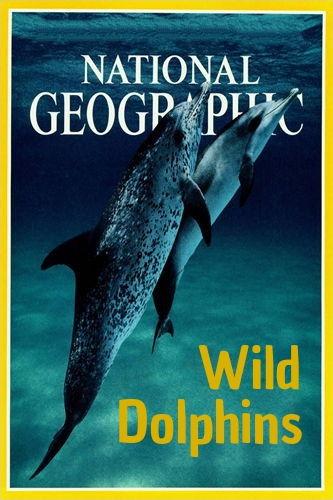 NGW: Дикие дельфины / Wild Dolphins (2017) HDTV [H.264 / 1080i-LQ]