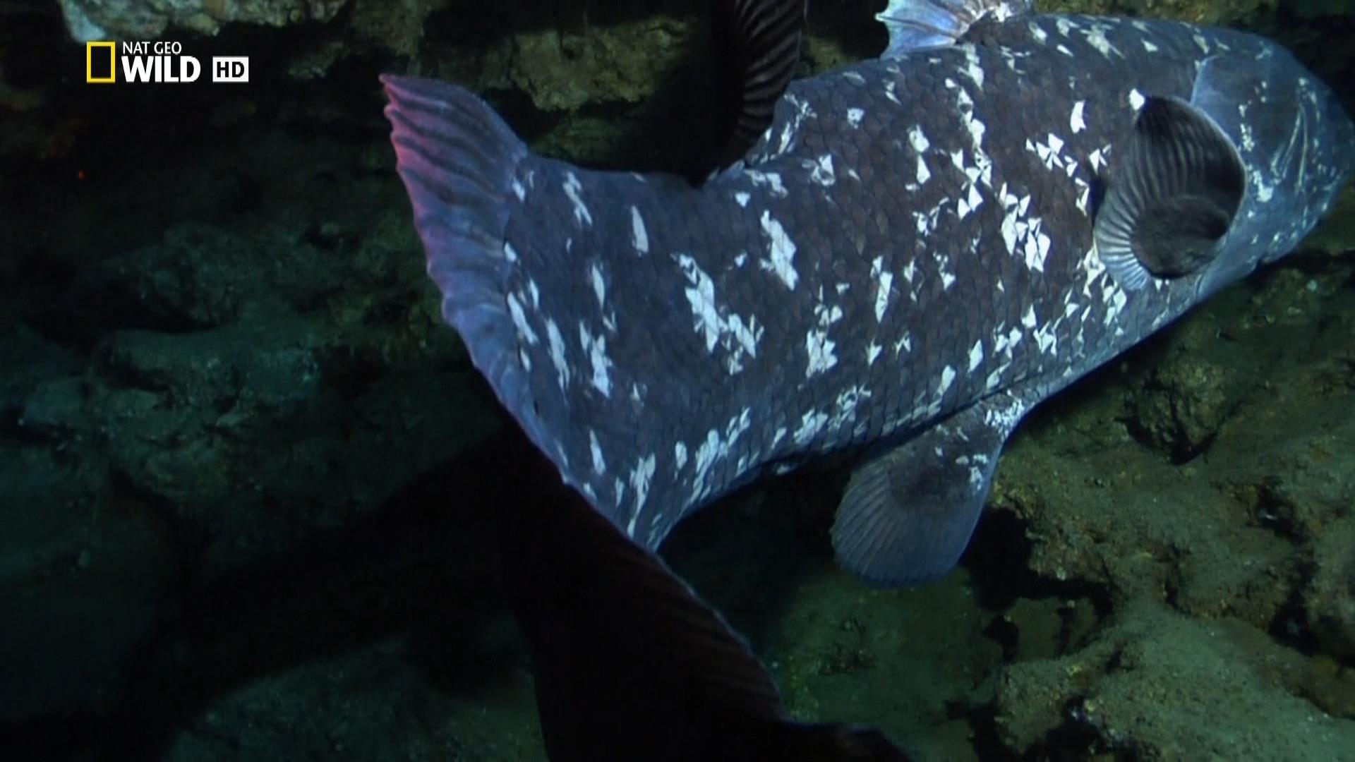 Динорыба / Dinofish (2011/HDTV) 1080i