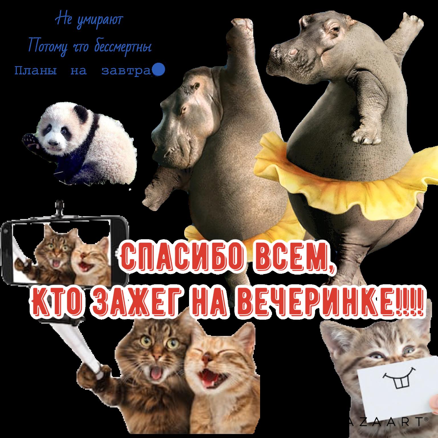 https://i5.imageban.ru/out/2019/04/06/ca09dd4643cfcdcb9ad1d430bf6a82c3.png