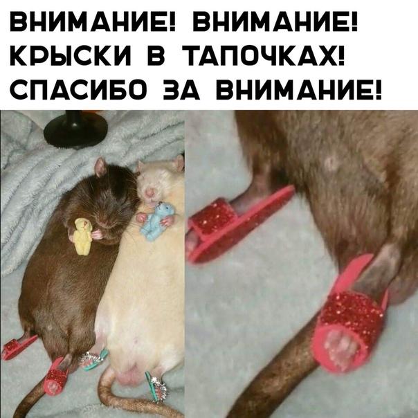 https://i5.imageban.ru/out/2019/04/13/b42cf14fe7de1f11777b98ca7f4fb089.jpg
