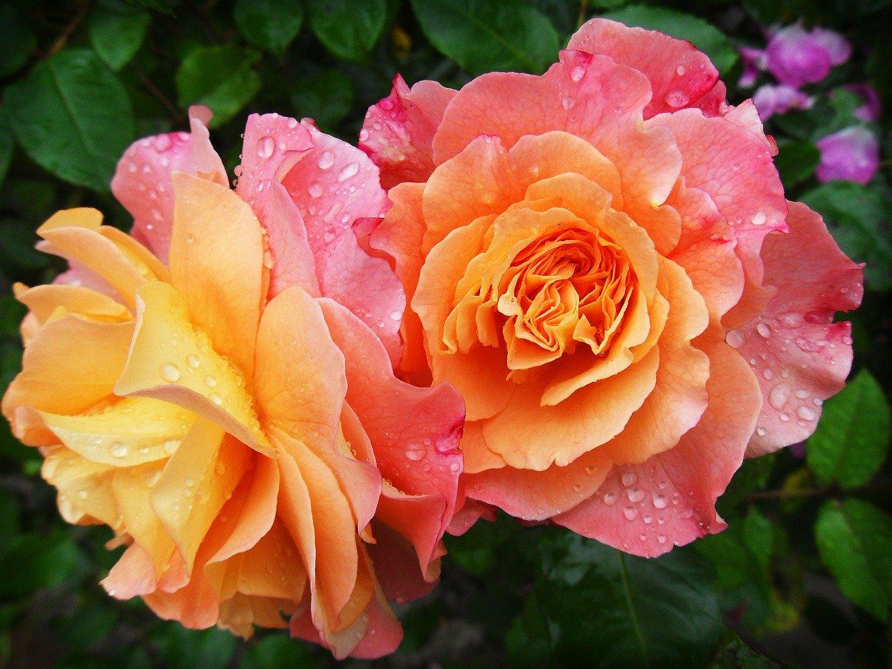 Цветочная парфюмерия для весны