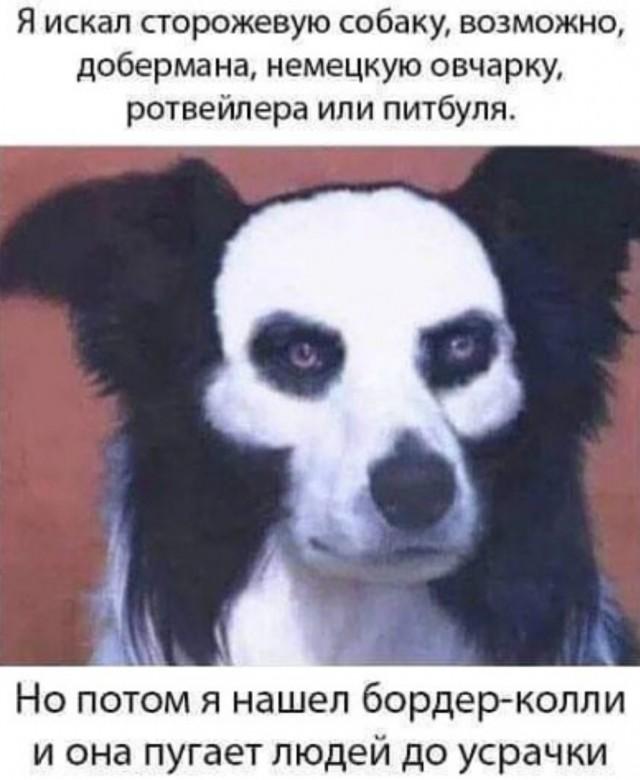https://i5.imageban.ru/out/2020/09/01/09613ff75639ea3240c0ce4c883763f5.jpg