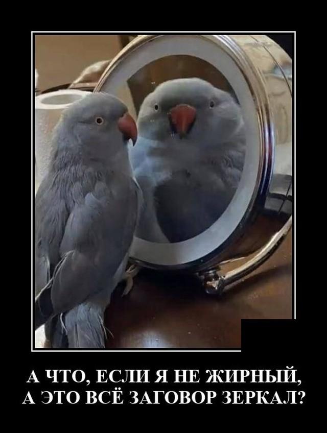 https://i5.imageban.ru/out/2021/06/13/ef60338364079cd3dc12a095603febc2.jpg