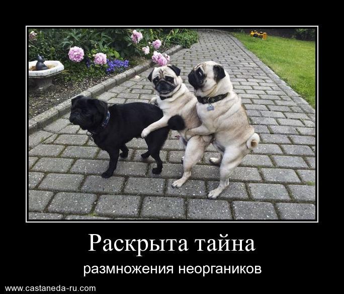 https://i5.imageban.ru/out/2021/07/17/113c40541363a3e357e58f14c82d89b1.jpg