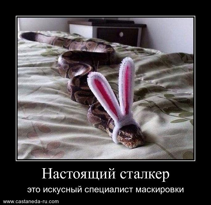 https://i5.imageban.ru/out/2021/07/17/289477f13d7213dbbe98eafc5e8adcab.jpg