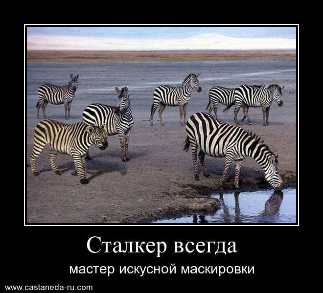 https://i5.imageban.ru/out/2021/07/17/77cb7a99fe63f92231e8fdcf07661345.jpg