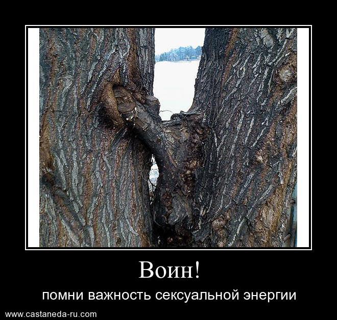 https://i5.imageban.ru/out/2021/07/17/c26612665f9084d299d5097d2c3a2f21.jpg