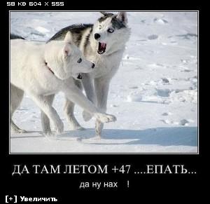 http://i5.imageban.ru/thumbs/2012.12.10/2645447574dde5e0465ffed1653f20e5.jpg