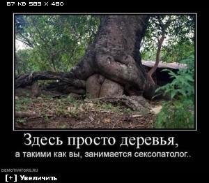 http://i5.imageban.ru/thumbs/2012.12.10/d932b22b2ea1633d77ea6d9b5a631da9.jpg