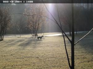 http://i5.imageban.ru/thumbs/2014.11.10/22539e4ce138053a137c25e04209cc46.jpg
