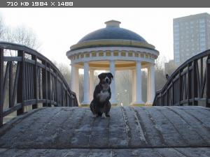 http://i5.imageban.ru/thumbs/2014.11.10/8ee1c0a2a87c90831361287cbf58ae8b.jpg