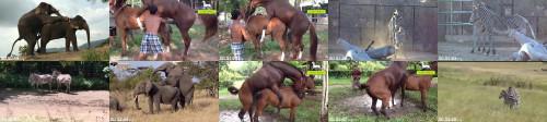 1a2dfca3fc23d69233c0e7d585a66972 - Elephant Mating Zebra Mating Horse Mating Animals Breeding Compilation
