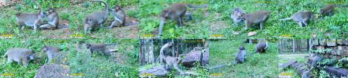 672b52ddaa021828beb42f6cf222ff14 - Funny Animal Sex Monkey Sex In Forest Very Funny And Sexy