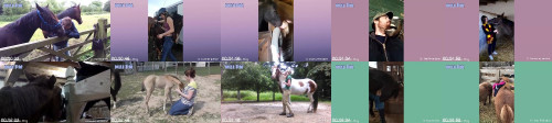 6af13df68625ce9ffeb050f1ee244611 - Horse Have Cute Ways To Say I Love You To Their Owner  Funny Horses Video
