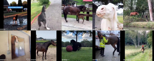 b0c2439f5a048d6ce42cff27f1ccf989 - Sexy Horse! Cute And Funny Horse Videos Compilation Cute Moment 25