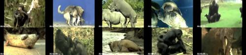 d3b090dd1b01dd395e937b8ffbc114c5 - Animals Mating Compilation 2020 - Funny Animals - Animals Breeding , Funny Videos